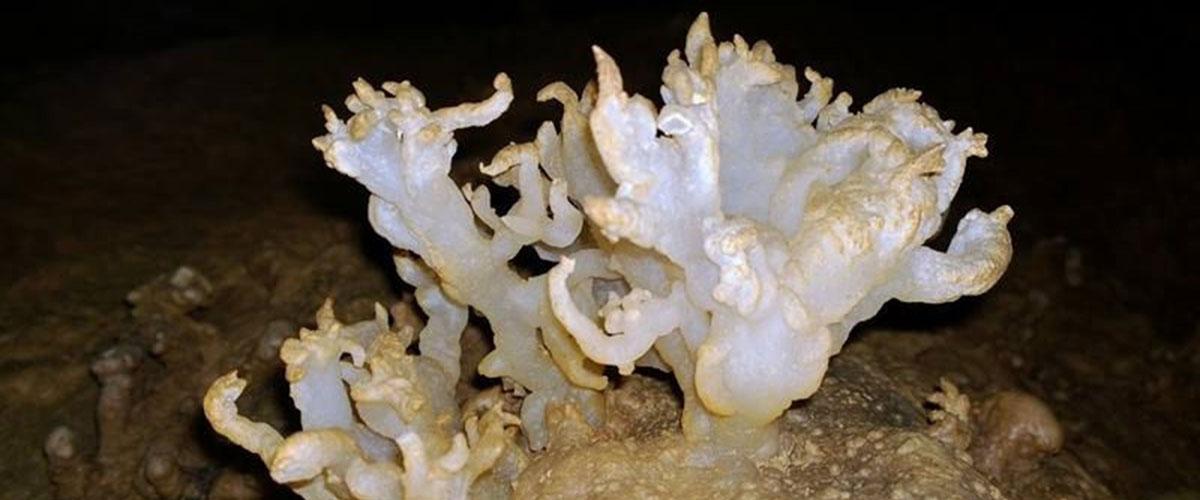 Berome Moore Cave heligmite